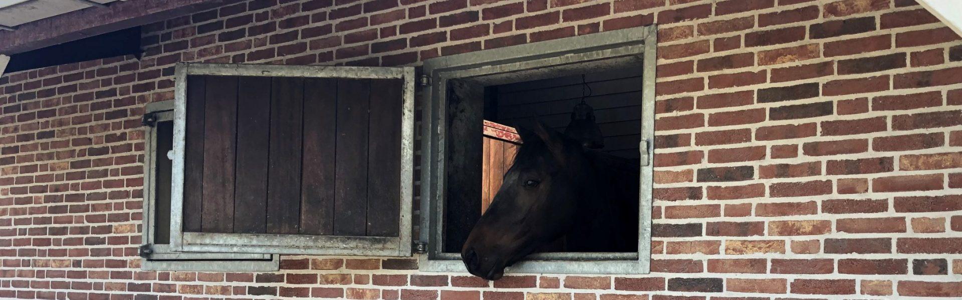 Horse-Inn